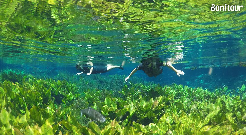 Aquário-Natural
