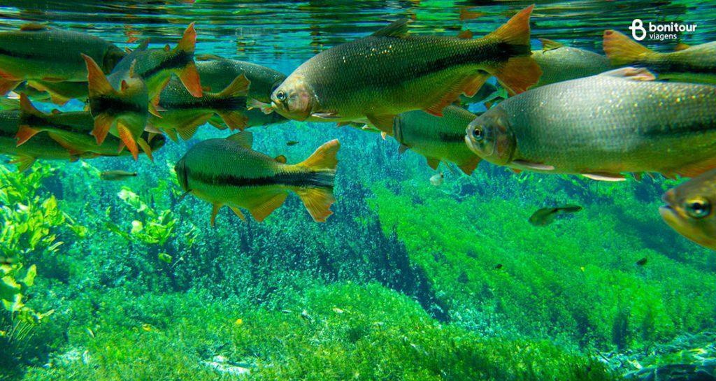 Aquário Natural de Bonito/MS em Setembro