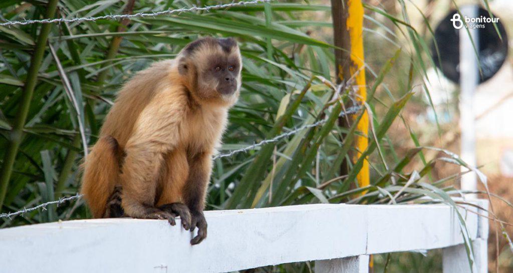 Observação de animais silvestres em Bonito/MS em Setembro