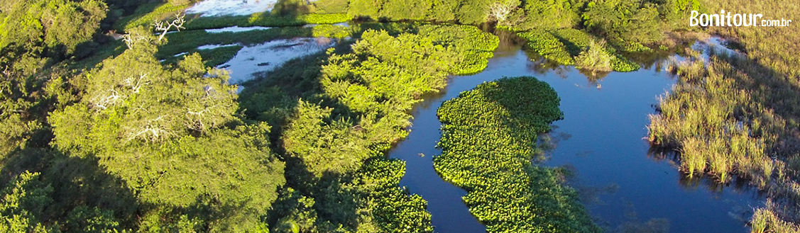pantanal bonito