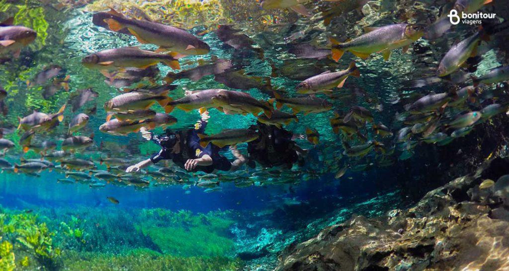 Bonito/MS em Outubro: Flutuação no Aquário Natural