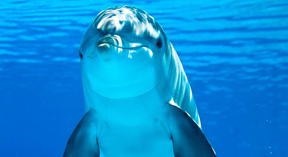 os_golfinhos_de_fernando_de_noronha