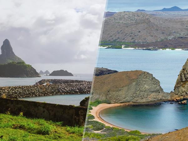 Mergulho em Noronha x Mergulho em Galápagos: qual escolher?
