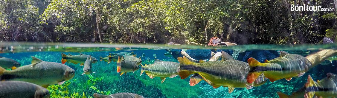 destaque_peixes