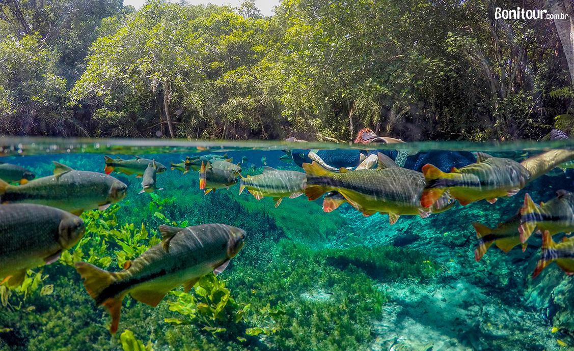 aquario-natural