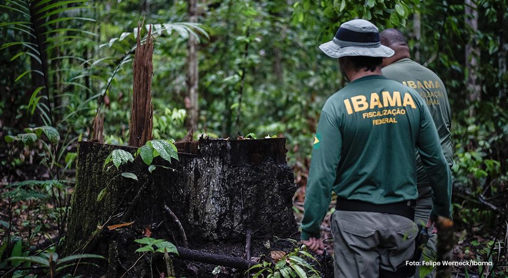 Você sabe o que o IBAMA faz?