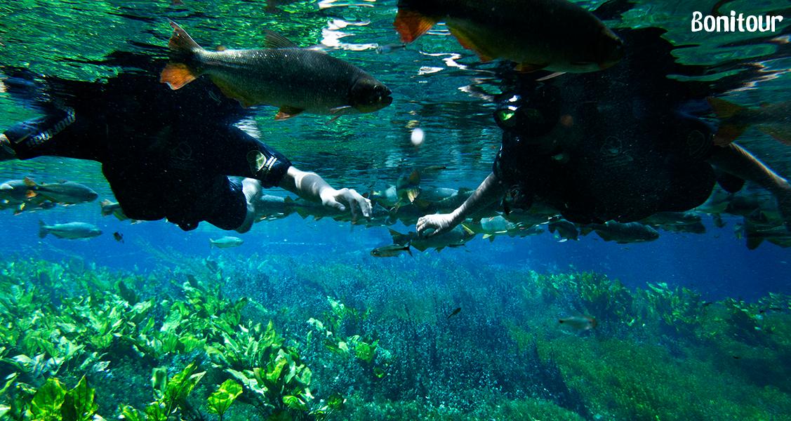 Flutuação-com-peixes-no-Aguário-Natural