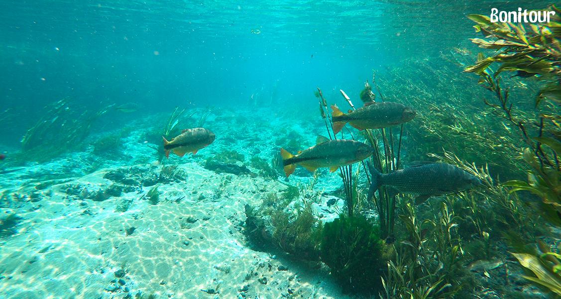 Flutuação-no-Rio-Sucuri-em-Bonito-MS