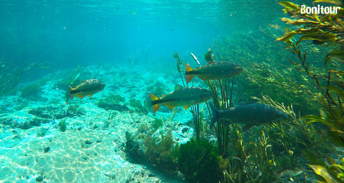 Foto-debaixo-d'água-no-Rio-Sucuri