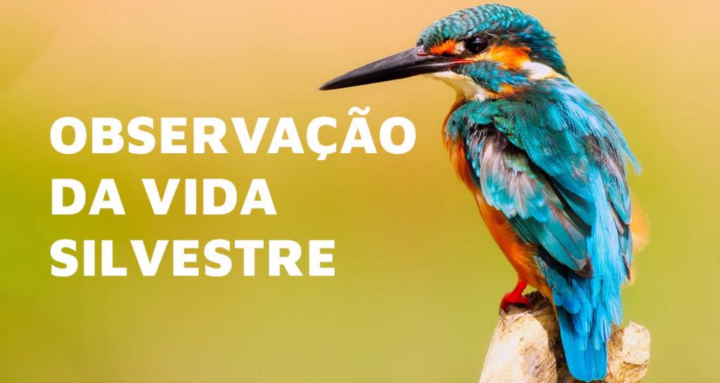 observacao-de-animais-selvagens - Foto: Pixabay via Pexels