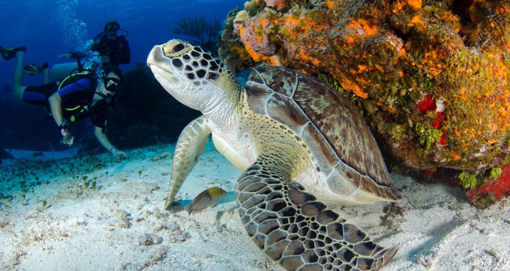 tartaruga - Foto: Leonardo Lamas via Pexels