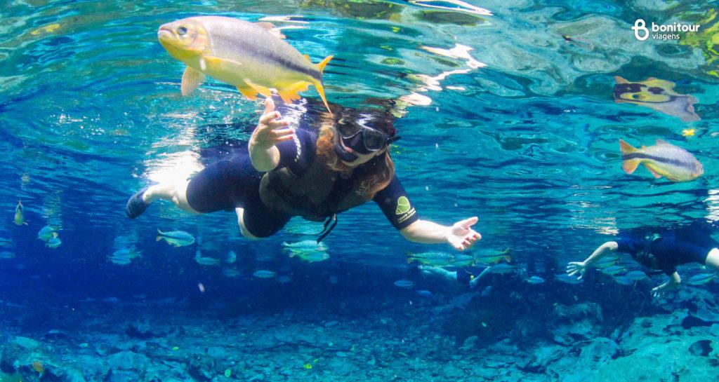 nadando-com-peixes - Bonito é um verdadeiro aquário natural para a observação de animais silvestres