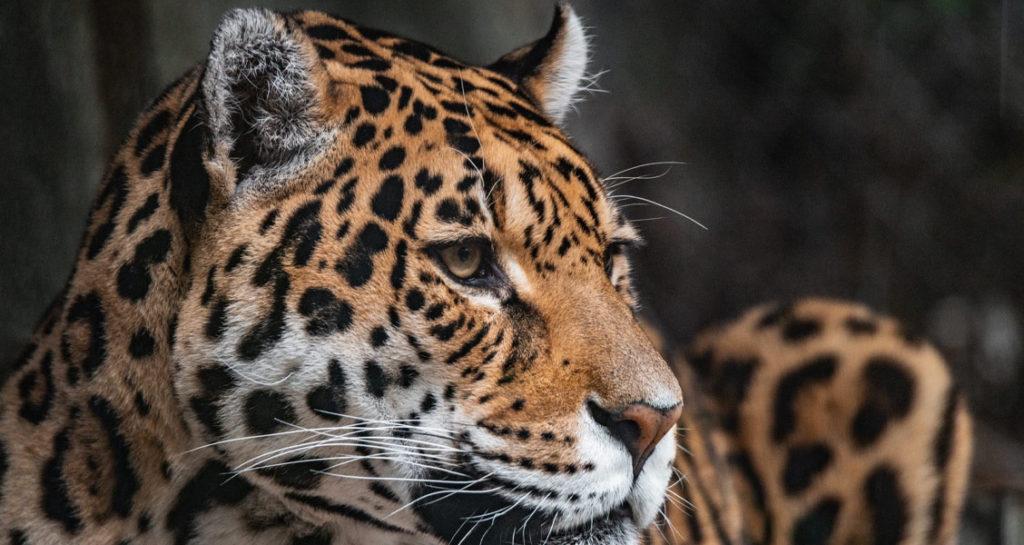 O Pantanal é um dos principais destinos para observar animais silvestres | Foto: Mike van den Bos via Unsplash
