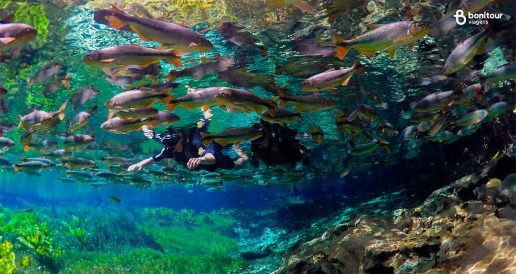 As águas de Bonito/MS - Aquário Natural